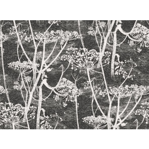 Cole & Son - New Contemporary I - Cow Parsley 66/7046