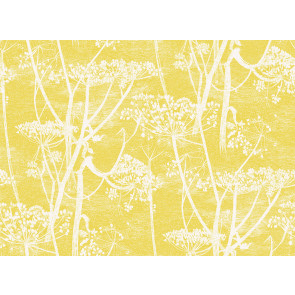 Cole & Son - New Contemporary I - Cow Parsley 66/7051