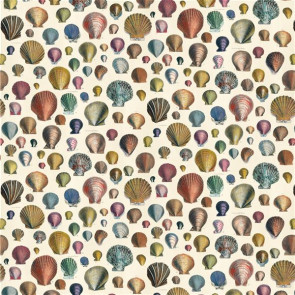 Designers Guild - Captain Thomas Browns Shells - FJD6003/01 Sepia