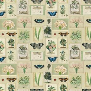 Designers Guild - Flora And Fauna - FJD6007/01 Parchment
