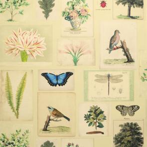 John Derian - Flora and Fauna - FJD6007/01 Parchment