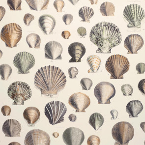 John Derian - Captain Thomas Browns Shells - PJD6000/02 Oyster