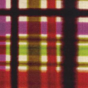 Élitis - Harold - Une gaîté contagieuse LB 733 35
